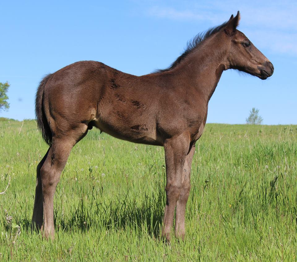 Dasher 2018 foals 2